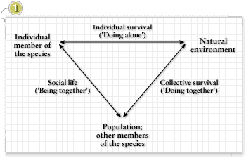 Structure of activity in transition from animal to human, Engeström, 1987, p. 76