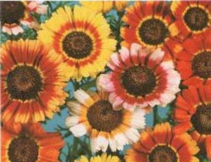 marché d'exportation des fleurs