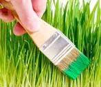Le Greenwashing : un argument écologique utilisé à mauvais escient