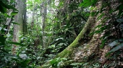 Dvlpt. de l'écotourisme au Cameroun: paradis écotouristique